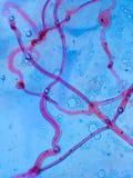vasos sanguíneos abstratos Imagem de Stock Royalty Free