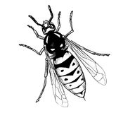 Vasp insect hand draw illustration Royalty Free Stock Image