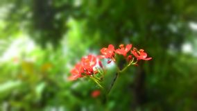Vasp op een bloem stock foto's