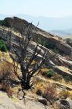 Vasquez vaggar naturligt område, kanjonland Fotografering för Bildbyråer