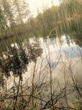 Vass и озеро Стоковая Фотография
