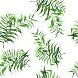 Vass för fan för palmblad för sömlös modellvattenfärg realistisk royaltyfri illustrationer