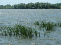 Vass för område för naturlig reserv för Tisza tó och segde och träd Arkivbilder
