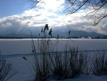 Vass i snön arkivfoto