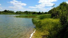 Vass på banken av sjön lager videofilmer