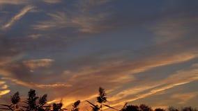Vass på solnedgången, slut upp stock video