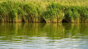 Vassen reflekterar i en sjö Arkivfoton