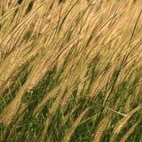 Vasser av gräs Arkivbild