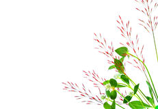 Vasser av gräs som isoleras på vit bakgrund Royaltyfria Bilder