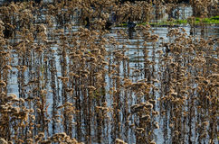 Vasser i en sjö royaltyfria foton