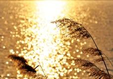 Vasser i guld- ljus arkivbild