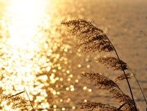 Vasser i guld- ljus arkivfoton
