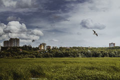 Vasser i vinden och seagullsna Royaltyfri Bild