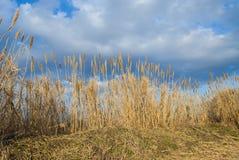 vasser på en molnig blå himmel Royaltyfria Bilder