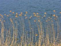 Vasser på sjön Royaltyfri Foto