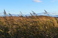 Vasser på stranden i stark vind arkivbilder