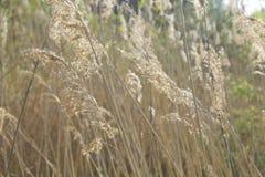 Vasser som prasslar i vinden Fotografering för Bildbyråer
