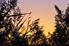 Vassgräs över färgrik solnedgånghimmel Royaltyfri Fotografi