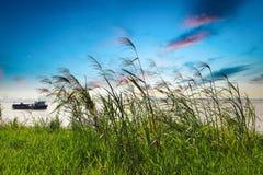 Vassgräs i solnedgångglöd arkivfoton