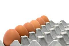 Vassoi dell'uovo del pollo Fotografie Stock