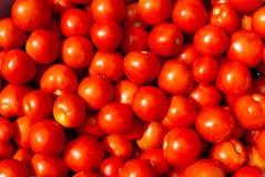 Vassoio del mercato dell'azienda agricola di agricoltura di estate in pieno di pomodori organici Fotografie Stock