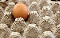 Vassoio dell'uovo con il singolo uovo marrone Immagini Stock