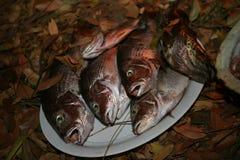 Vassoio dello snapper e del merluzzo freschi sulla terra nelle foglie immagini stock libere da diritti