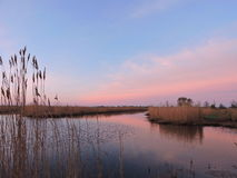 Vassväxt nära sjön, soluppgång Royaltyfri Foto