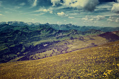Vast Alpine Mountain Range and Flower Field Royalty Free Stock Photo