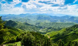 Vast Bamboo forest landscape. Taken on top of Moganshan mountain royalty free stock image