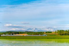 Vast blue sky and white clouds over paddy farmland field in a beautiful sunny day in springtime. Panoramic rural landscape. With mountains stock photography