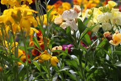 Vast colourful collection of flowers stock photography