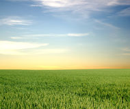 Vast field and clear sky. A picture of a vast open field under an orange-blue clear sky stock images
