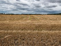 Vast Field of Harvested Barley, County Carlow, Ireland. An agricultural scene from the Republic of Ireland shows a barley field after the harvest has been cut stock images