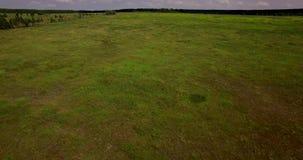 Vast field landscape aerial view. Vast green field landscape aerial view on a summer day stock footage