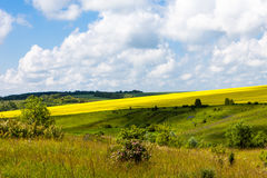 Vast fields of daisies and flowering mustard in Russia Stock Photos