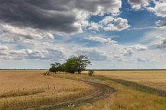Among the vast fields of homeland Royalty Free Stock Photos