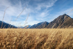 Vast grass land stock photo