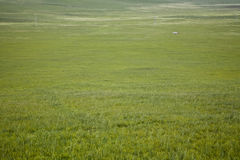 Vast grassland Stock Photography
