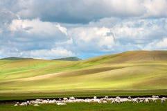 Vast grassland royalty free stock image
