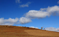 Vast grassland scenery. The scenery in autumn in Inner Mongolia, Vast grassland , blue sky and white clouds and some horses. take photo in Ulan Buh China Royalty Free Stock Image