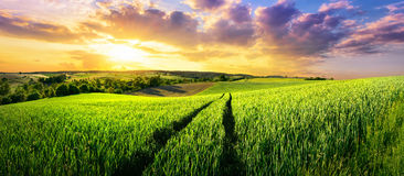 Vast green field at gorgeous sunset Royalty Free Stock Photos