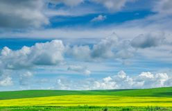 Vast green prairie. The green prairie with sea of flowers, like a huge carpet under blue sky royalty free stock images