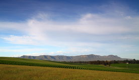 Vast green vineyards. Green vineyards in the Hunter Valley with distant mountains royalty free stock photography