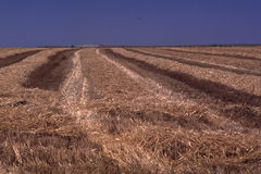 Huge hay field, cutting rows Royalty Free Stock Photography