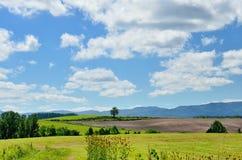 Vast landscape of Biei, Hokkaido. Stock Photography