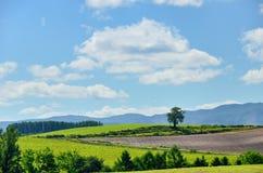 Vast landscape of Biei, Hokkaido. Royalty Free Stock Photo