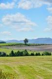 Vast landscape of Biei, Hokkaido. Royalty Free Stock Images
