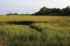 Vast Marsh Land. This open space is a vast marsh land. Thick marsh grass sways in the wind and sea water works it's way through the wetland. The shoreline of Stock Photo