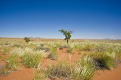 Vast, orange sand in desert, Namibia, Africa Royalty Free Stock Photos